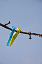 A blue and a yellow clothes peg hanging on a branch in front of blue sky - AXF000696