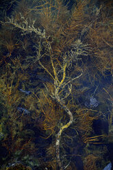 Stream with aquatic plants - AXF000697