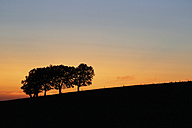 Germany, Black forest, Beech tree, Windswept trees in the evening - SGF000763