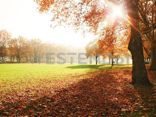 Moorweidewiese Park in Hamburg, Germany - BMA000039 - Matthias Buchholz/Westend61