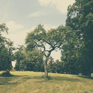 Tree in Schacky Park, Unterdiessen, Bavaria, Germany - GS000876