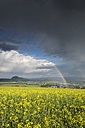 Germany, Baden-Wuerttemberg, Constance district, Hegau, Rainbow, Rape field - ELF001065