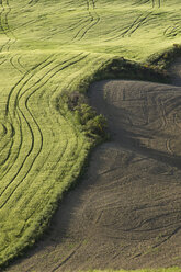 Italy, Tuscany, Crete Senesi, Tyre tracks of a tractor on field - MYF000344