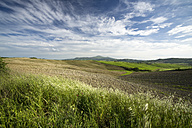 Italy, Tuscany, Landscape with field near Pienza - MYF000348