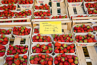 Germany, Bavaria, Neu-Ulm, Strawberries, Fragaria, - WGF000311