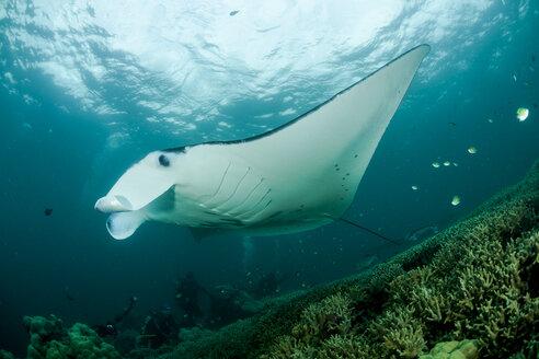 Oceania, Micronesia, Yap, Reef manta ray, Manta alfredi - FG000087