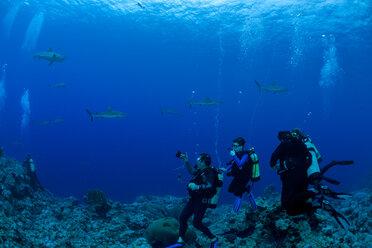 Oceania, Micronesia, Yap, Divers with grey reef sharks, Carcharhinus amblyrhynchos - FG000089