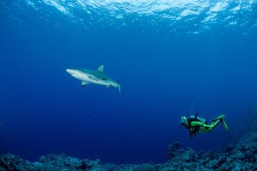 Oceania, Micronesia, Yap, Diver with grey reef sharks, Carcharhinus amblyrhynchos - FG000090
