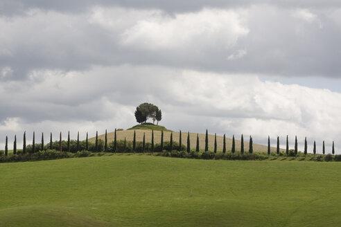 Italy, Tuscany, Landscape near Siena - MYF000385