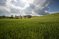 Italy, Tuscany, Landscape against the sun - MYF000388