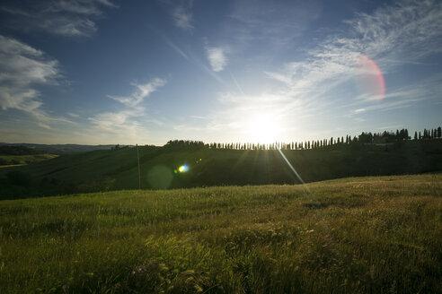 Italy, Tuscany, Crete Senesi, Landscape at sunset - MYF000443