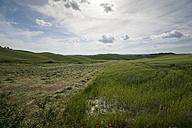 Italy, Tuscany, Province of Siena, Typical landscape near Siena, Hay harvest - MYF000400