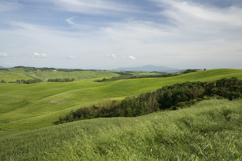 Italy, Tuscany, Province of Siena, Typical landscape near Siena - MYF000403