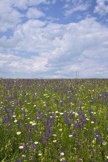 Germany, Baden-Wuerttemberg, Flower meadow - ELF001091