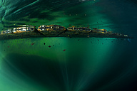 Oceania, Palau, Eik Malk, Fishes under jetty in saltwater lake - FGF000036