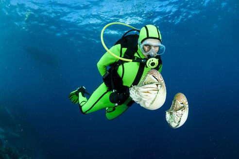 Oceania, Palau, Diver watching Palau nautilusses, Nautilus belauensis, in Pacific Ocean - FGF000040
