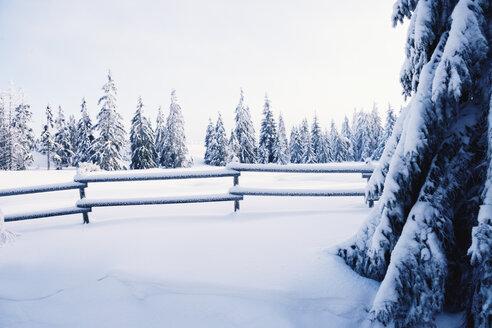 Germany, Lower Saxony, winter landscape in Harz - MEM000240