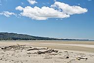 New Zealand, Golden Bay, beach with driftwood at Pakawau - SHF001414