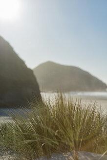 New Zealand, Golden Bay, Wharariki Beach, tussock grass in a sand dune at the beach - SHF001454