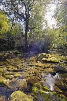 New Zealand, Tasman, Golden Bay, Takaka, stream along the Pupu Hydro Walkway - SHF001475