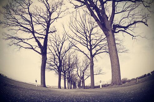 Germany, Lower Saxony, Osnabruecker Land, Tree-lined road in winter, Fisheye - HOH000885