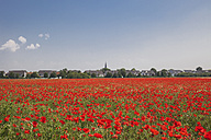 Germany, Cologne Widdersdorf, poppy field - GWF003556