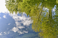 New Zealand, South Island, Nelson, Maitai River, mirror image of trees and clouds in the water - SHF001525