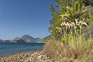 New Zealand, South Island, Marlborough Sounds, Tennyson Inlet, shoreline in the sounds of Duncan Bay - SHF001545