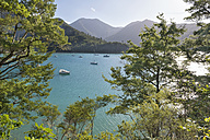 New Zealand, South Island, Marlborough Sounds, Tennyson Inlet, sounds of Duncan Bay - SHF001548