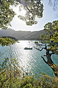 New Zealand, South Island, Marlborough Sounds, Tennyson Inlet, sounds of Duncan Bay - SHF001549