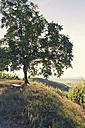 France, single tree on a hill at back light - MEM000255
