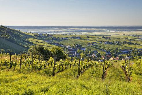 Austria, Burgenland, Oberwart District, Eisenberg an der Pinka, Vineyard - SIEF005584