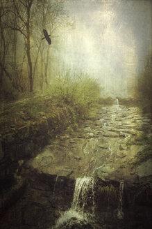 Italy, Lombardy, Mallero creek at a rainy day - DWI000114