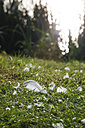 White feathers lying on a meadow at sunlight - JT000561