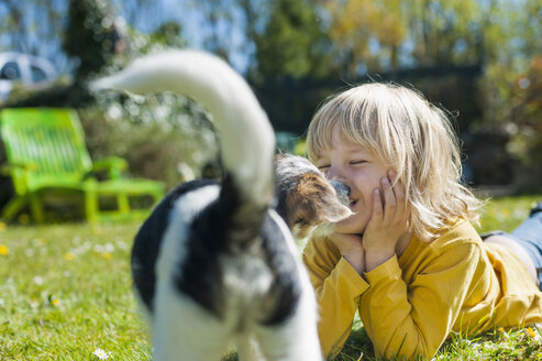 Boy playing with Jack Russel Terrier puppy in garden - MJF001306