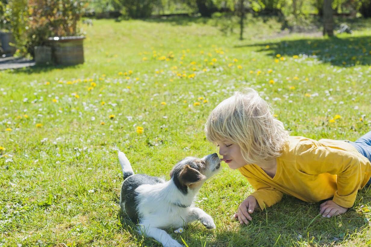 Boy playing with Jack Russel Terrier puppy in garden - MJF001315 - Jana Mänz/Westend61