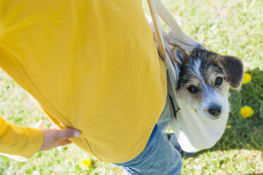 Boy carrying Jack Russel Terrier puppy in bag - MJF001324