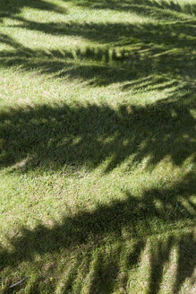 Portugal, Sintra, shadow of a palm tree - FAF000002