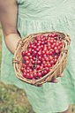 Little girl holding basket of red currants, partial view - LVF001620