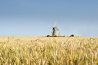 France, Normandy, Wheat field, Triticum, Wind mill - MKFF000007
