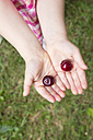 Hands of little girl holding two cherries - LVF001674