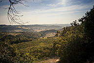 Italy, Tuscany, San Casciano in Val di Pesa, rolling landscape with olive trees - SBDF001133