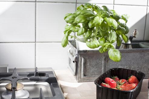 Stillife in a kitchen - FEXF000182