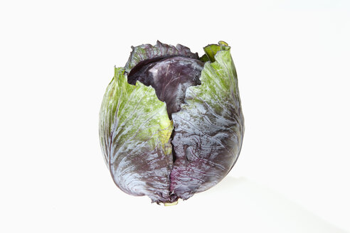 Red cabbage, Brassica oleracea convar. capitata var. rubra L., on white background - CHF000082