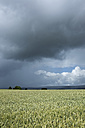 Germany, Constance district, stormy atmosphere over Black Forest - ELF001236