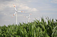 Germany, Saxony, Wind turbines in maizefield - LYF000221