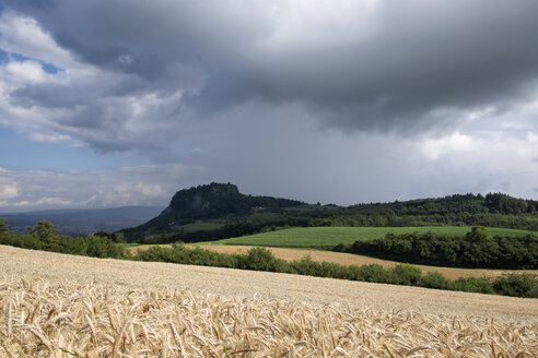 Germany, Baden-Wuerttemberg, Constance district, Hegau, Hohentwiel, Barley field and thunderclouds - ELF001241