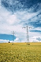 Germany, Baden-Wuerttemberg, Constance district, Barley field and power pylons - ELF001244
