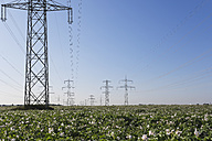 Germany, North Rhine-Westphalia, Pulheim, High voltage power lines and potato field - GWF003099