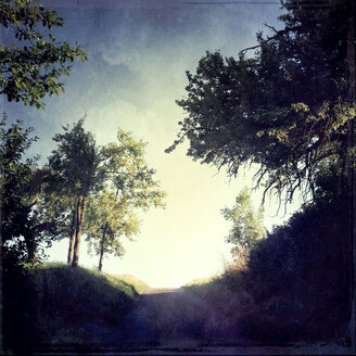 Path and trees - LVF001723